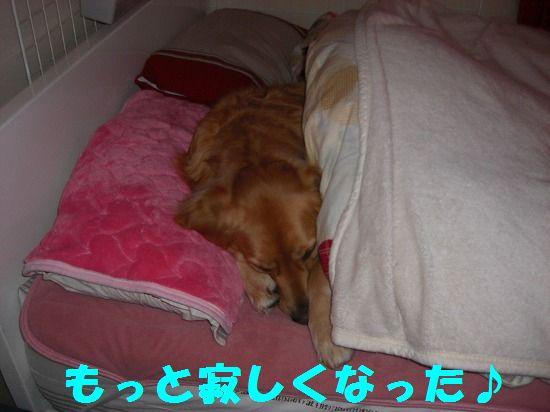 12_20111210205451.jpg