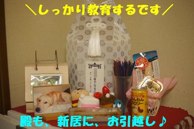 12_20120117221940.jpg