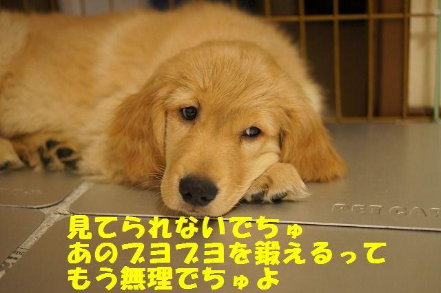12_20120119222448.jpg