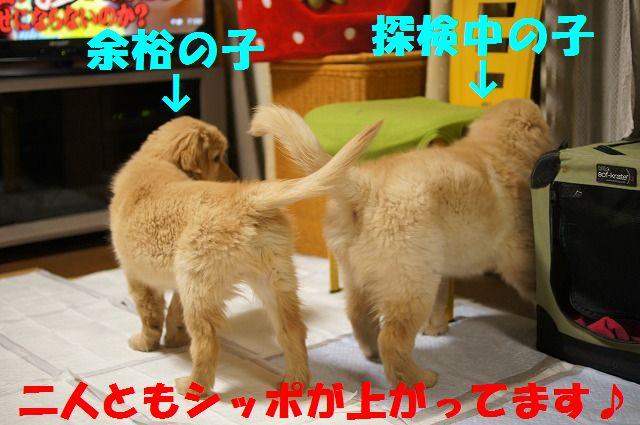 12_20120122230335.jpg
