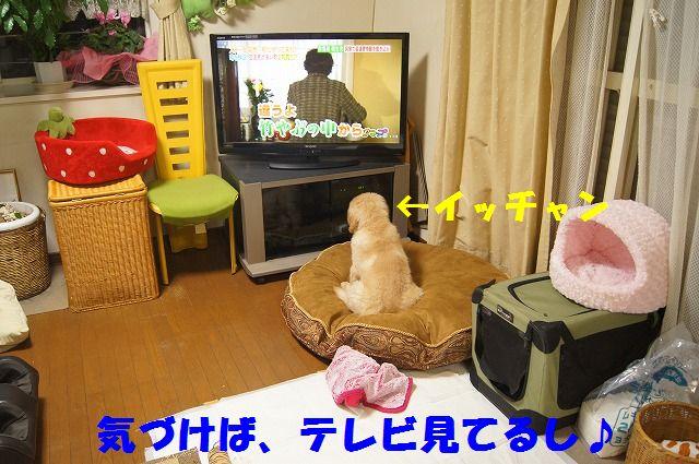 12_20120125214204.jpg