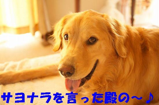 13_20111210205525.jpg