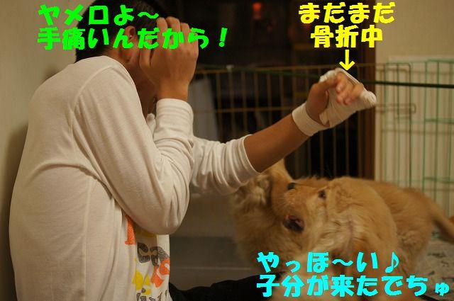 13_20120119222518.jpg