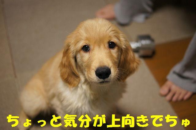 13_20120121224352.jpg