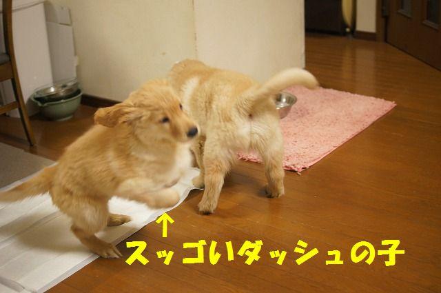13_20120122230405.jpg