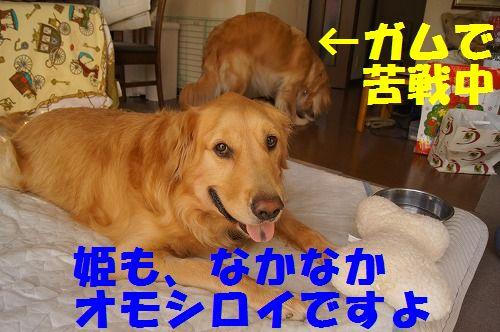 14_20111122234021.jpg