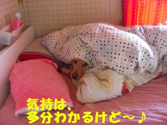14_20111210205522.jpg