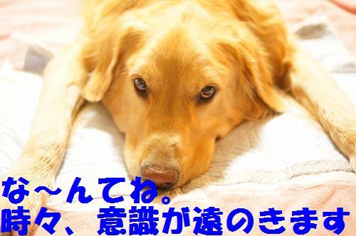 15_20111123225011.jpg