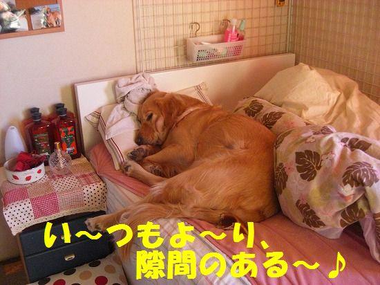 15_20111210205521.jpg