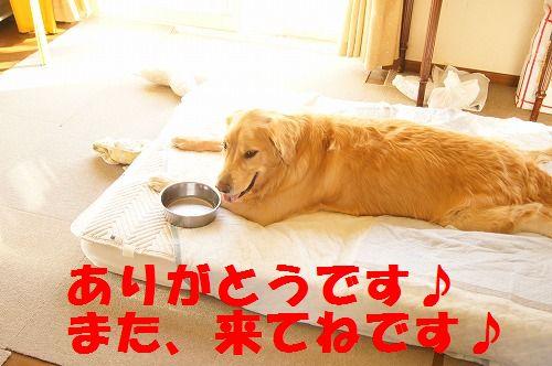 16_20111122234037.jpg