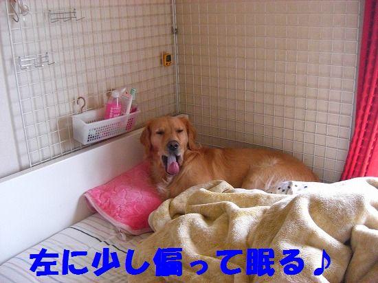 16_20111210205521.jpg