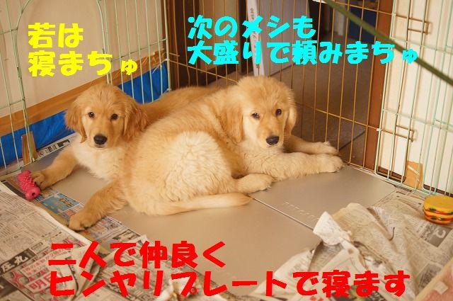 16_20120118203902.jpg