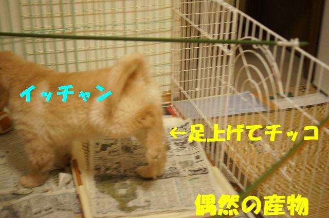16_20120119222516.jpg