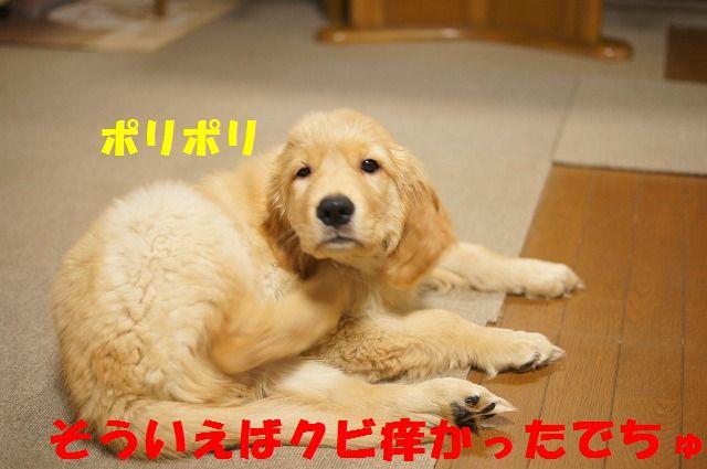 16_20120121224351.jpg