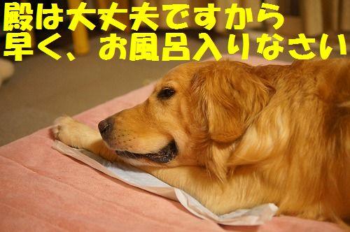 17_20111123225010.jpg
