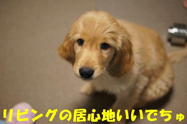 17_20120121224350.jpg