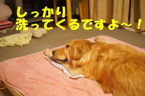 18_20111123225028.jpg