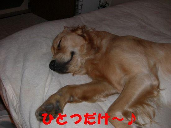 18_20111210205520.jpg