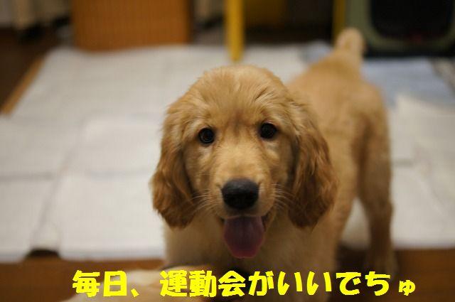 18_20120122230402.jpg