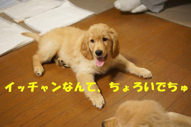 19_20120122230421.jpg