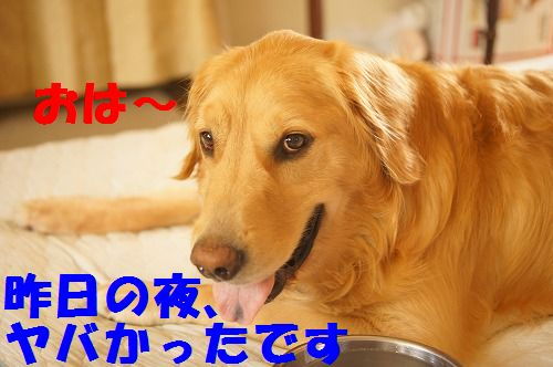 1_20111122233914.jpg