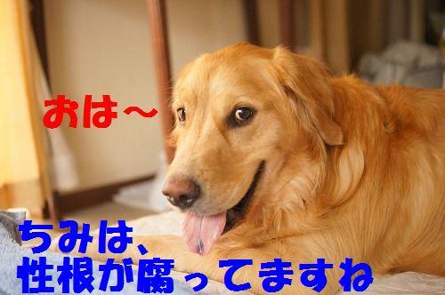 1_20111123224925.jpg