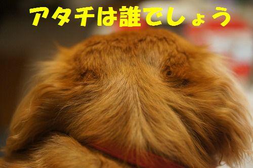 1_20111126194943.jpg