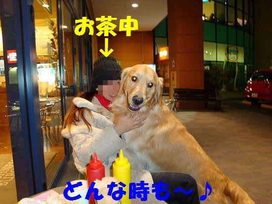 1_20111207193800.jpg