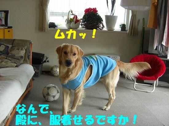 1_20111209203430.jpg