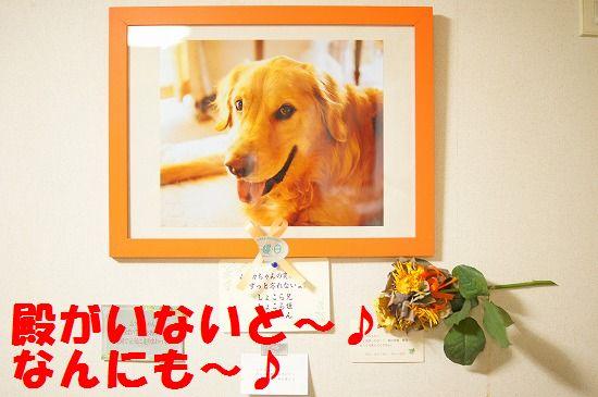 1_20111210205423.jpg