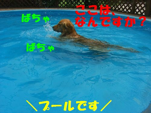 1_20111215204523.jpg