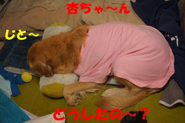 1_20120111204551.jpg
