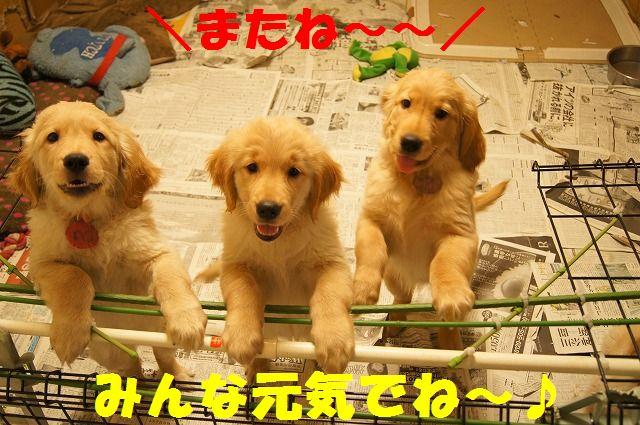 1_20120117221915.jpg
