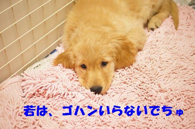 1_20120120215539.jpg