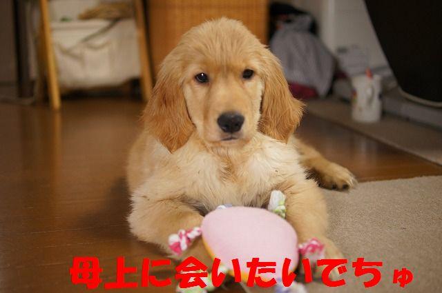 1_20120121224303.jpg