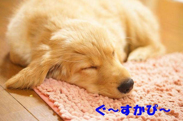 1_20120122230311.jpg
