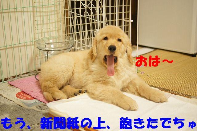 1_20120123221733.jpg