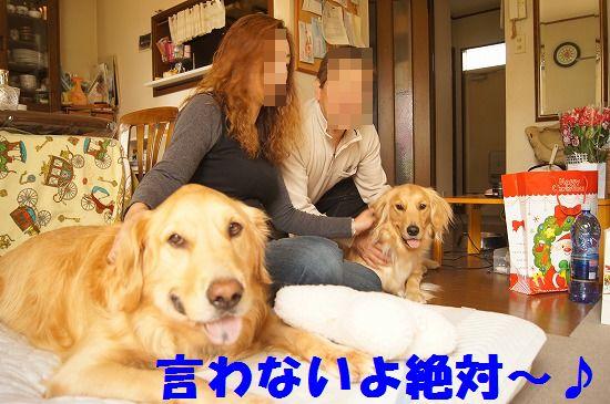 21_20111210205540.jpg