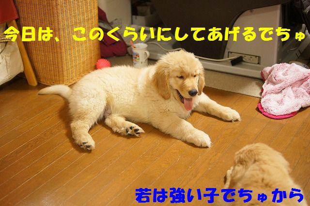 21_20120122230420.jpg