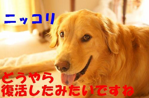 2_20111123224925.jpg