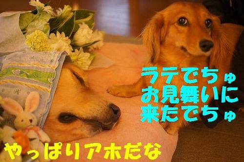 2_20111125222759.jpg