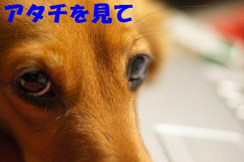 2_20111126194943.jpg