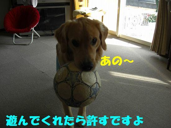 2_20111209203430.jpg