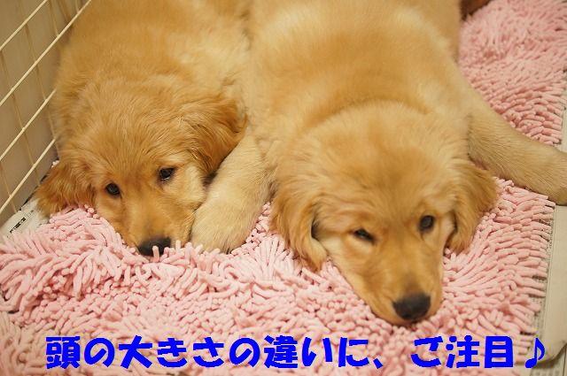 2_20120120215539.jpg