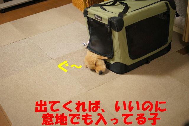 2_20120122230310.jpg