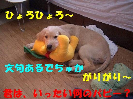 362_20111211202604.jpg