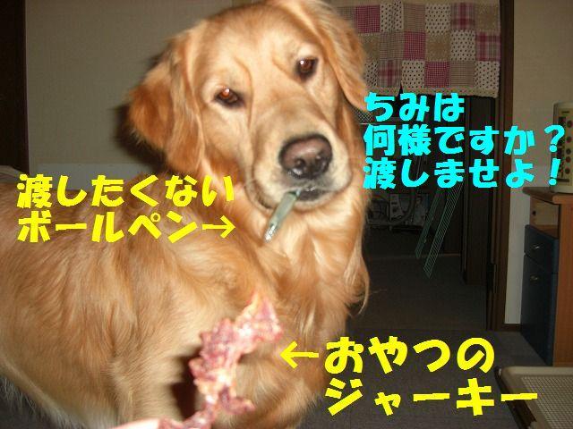 386_20120106204622.jpg