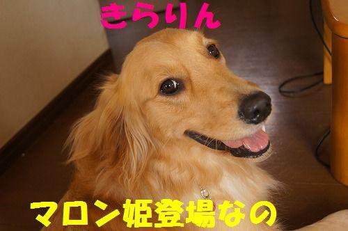 3_20111122233913.jpg
