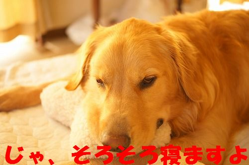 3_20111123224924.jpg