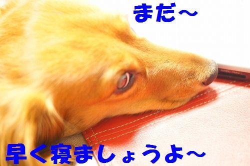3_20111126194942.jpg